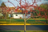 Sauk City, Wisconsin, USA, 2008 : from AMERICOLOR series