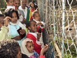 Addis in Motion: Street Photography from Ethiopia : Children crowding at the deer cage in a zoo in Addis Ababa.