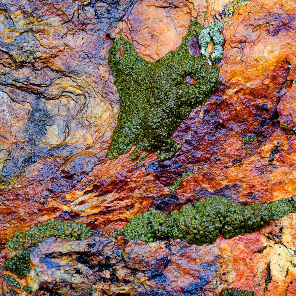 Rock and Leichen, Tahoe, Callifornia : Water can bring out the most in both rocks and lichens.  Damp from an early season snow shower, this rock and lichen truly glistened as the green lichen played a perfect complement to the reds, purples, and oranges of the rock.